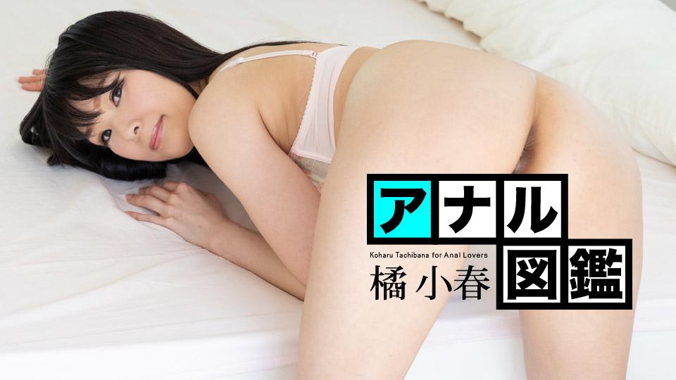 アナル図鑑 橘小春
